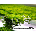 Ferka Aquashade [500ml] - makroelementy dla roślin wolnorosnących