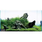 Glossostigma elatinoides - in-vitro Aqua-Art