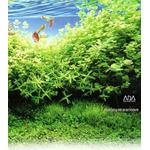 Gotowy zestaw roślin nr 001 do akwarium 80l (10 szt)