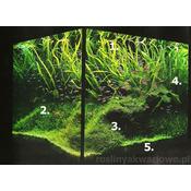 Gotowy zestaw roślin nr 002 do akwarium 250l (13 szt)