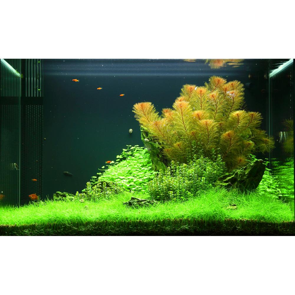 Gotowy zestaw roślin nr 049 do akwarium 100l (4 szt)