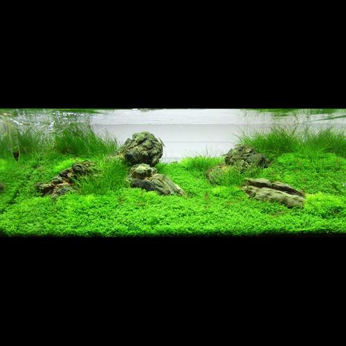 Gotowy zestaw roślin nr 055  do akwarium 72l (13 szt.)