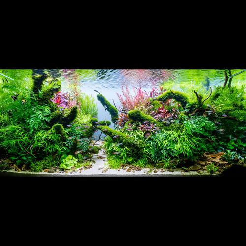 Gotowy zestaw roślin nr 118 do akwarium 210l (24 szt)