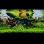 Gotowy zestaw roślin nr 122 do akwarium 110l (9 szt)