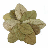 Guava Leaves [10 szt] - liście guawy