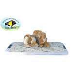 IKOLA Kamienie Desert Rocks [1kg]