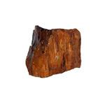 Ikola Skała wood fossil