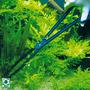 JBL CombiFix - szczypce do roślin [46cm]