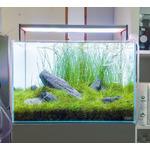 Kamienie Wild Rhino Stone [1kg] - SS, XL