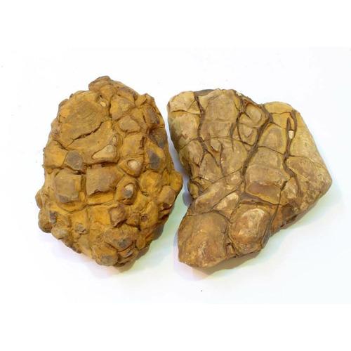 Kategorie Shell Vein Rock Yellow [10kg] BOX