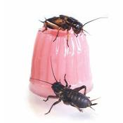 Komodo Jelly Pot Calcium - pokarm wapno w żelu