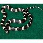 Komodo Reptile Carpet - podłoże do terrarium [120x60cm]
