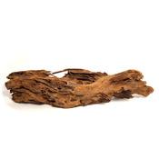 Korze? mangrowca M (25-33cm) [356030] - 1 sztuka