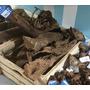 Korzeń mangrowca L (40-60cm) (356035) - 1 sztuka