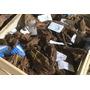 Korzeń mangrowca M (25-33cm) [356030] - 1 sztuka