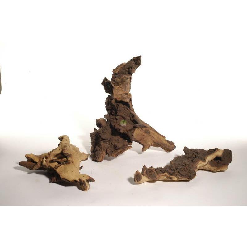 Korzeń Mopani RPA IKOLA - 1kg (na wagę)
