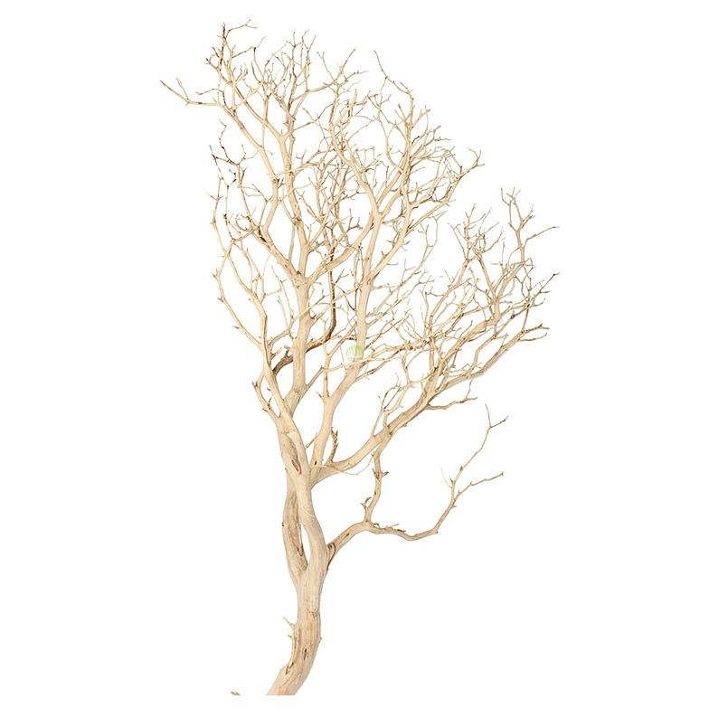 Korzeń na drzewko w akwarium - 1 sztuka
