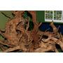 Korzenie Red Moor Root - 1kg