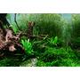 Korzenie Red Moor Root [1kg] - korzeń z wrzosowisk