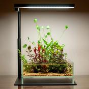 Lampa Chihiros C II LED [20-30cm] - bluetooth