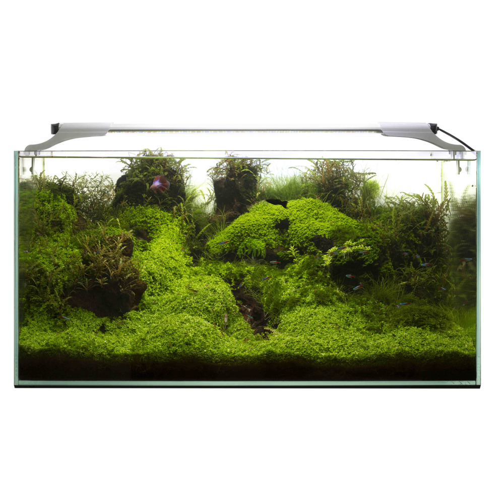 Lampa LED AquaEL LEDDY SLIM [36W] - PLANT - srebrna