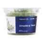 Limnophila vietnam- in-vitro Aqua-Art