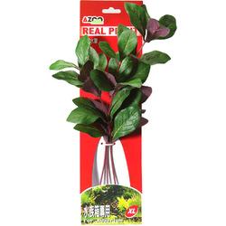 LOBELIA CARDINALIS 12 [31cm] - Rośliny z miękkiego, tkanego materiału
