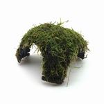 Mech jawajski na kokosie z otworami - PLANTACJA