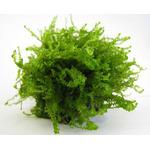 Mech Moss sp. 610 - [opakowanie]