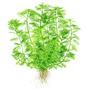 Myriophyllum mattogrossense - TROPICA (koszyk)