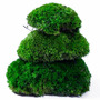 Natural Forest Moss - prawdziwy mech ciemna zieleń