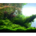 Nawóz Aqua Rebell - Advanced GH Boost N [500ml] - nawóz N+Mg+Ca bez potasu