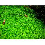 Nawóz Aqua Rebell - MAKRO BASIC Estimative Index [500ml] - makroelementy