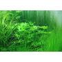 Nawóz Aqua Rebell - MAKRO BASIC NPK [500ml] - makroelementy