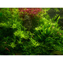 Nawóz Aqua Rebell - MAKRO SPEZIAL Licht [500ml] - makroelementy