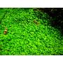 Nawóz Aqua Rebell - MAKRO SPEZIAL N [1000ml] - nawóz azotowy (NO3 + K + Ca + Mg)