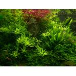 Nawóz Aqua Rebell - MIKRO BASIC Eisenvolldunger [1000ml] - mikroelementy