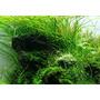 Nawóz Aqua Rebell - MIKRO BASIC Eisenvolldunger [5000ml] - mikroelementy