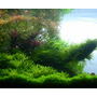 Nawóz Aqua Rebell - MIKRO SPEZIAL Eisen Fe [1000ml] - nawóz żelazowy