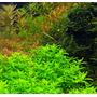 Nawóz Aqua Rebell - MIKRO SPEZIAL Flowgrow [1000ml] - mikroelementy