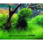 Nawóz Ferka Aquashade [250ml] - makroelementy dla roślin wolnorosnących