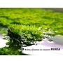 Nawóz Ferka Aquatilizer [500ml] - mikroelementy