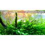 Nawóz VIMI STIMULATOR [50ml] - hormony roślinne