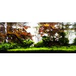 Nawóz YOKUCHI Gen BG [400ml] - mikroelementy