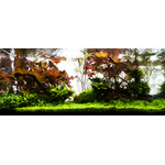 Nawóz YOKUCHI Gen P [400ml] - fosfor