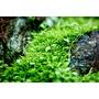 Neo Tabs Plant K - tabletki nawozowe z potasem