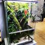 Neoregelia Monet - roślina do akwapaludarium