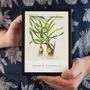 Obrazki Tropica Art Cards - Cyperus [13x18cm] - 5 sztuk