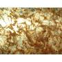 Ocean Nutrition Brine Shrimp Eggs [50g] - jaja artemii