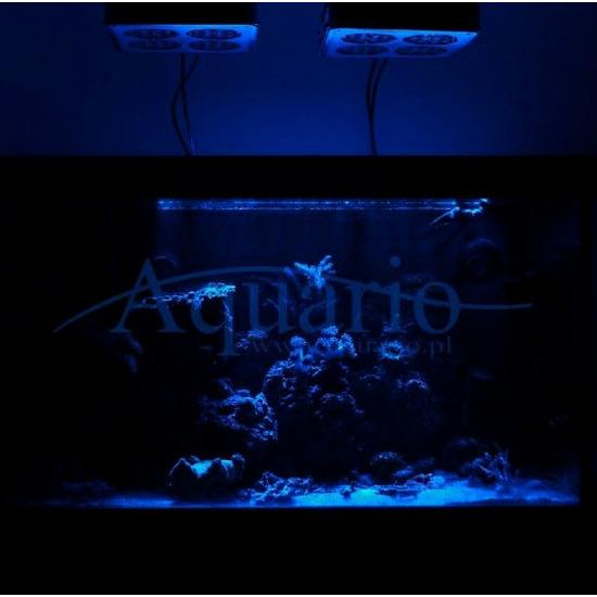 Oświetlenie nocne LED 2w1 z pilotem [25cm]
